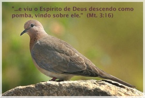 Pomba-simbolo do Espírito Santo